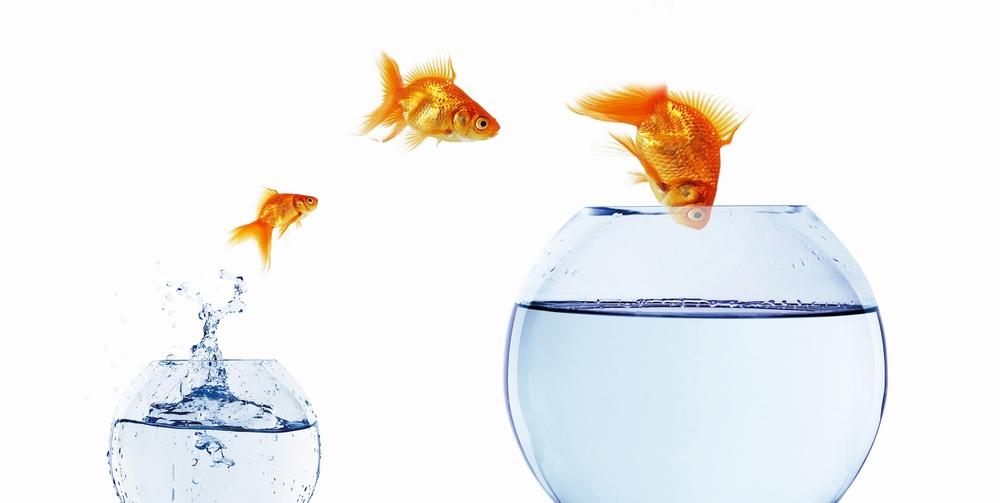 fish+jumping+into+bigger+bowl